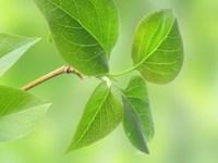 «Green Procurement» webinar within «Green Arctic Building» Kolarctic project